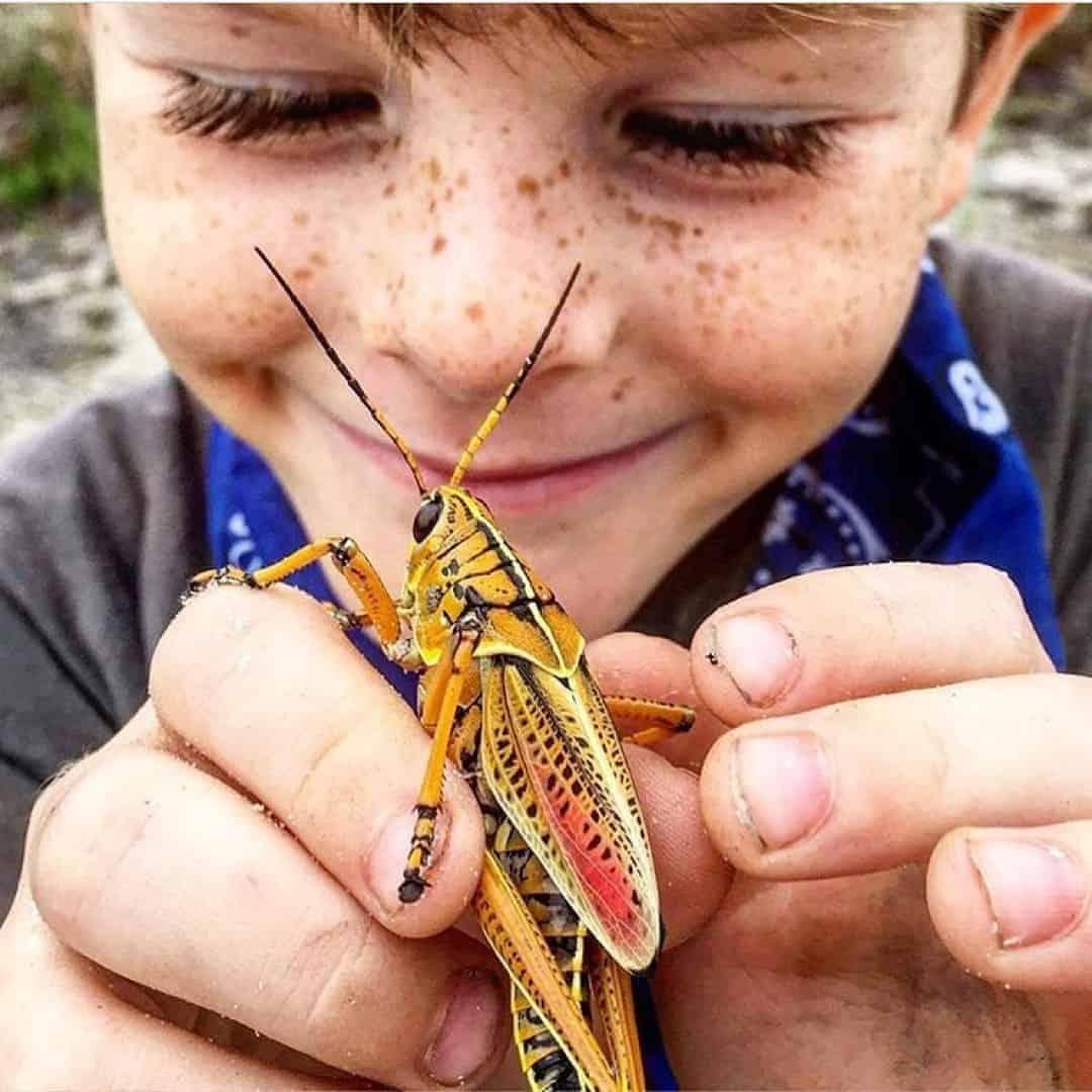 15 راهکار مقابله با ترس کودکان از حشرات
